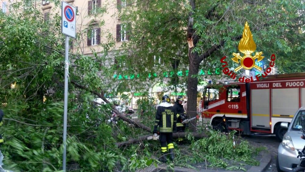 albero caduto-4-5