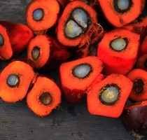 Olio di palma - image 2