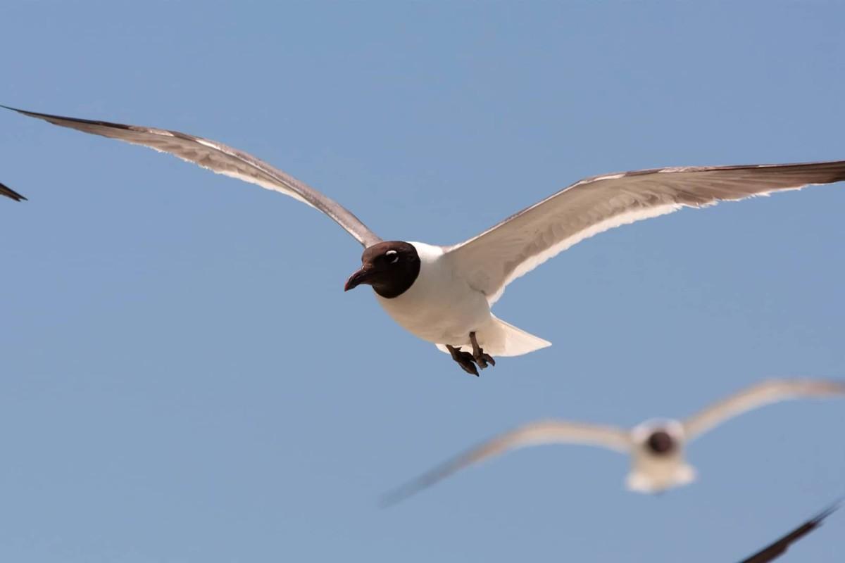 Uccelli-selvatici-copertina